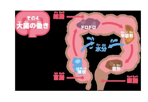 大腸の働き